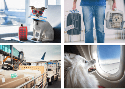 Froniter Airlines pet policy